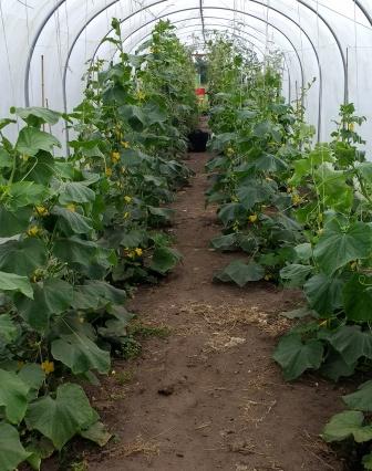 cuc plants crop