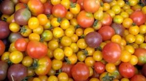 toms crop