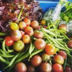 veg_crop