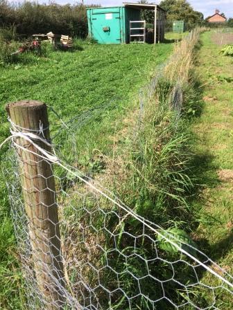 rabbit proof fence_crop