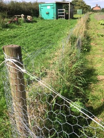 rabbit proof fence_crop